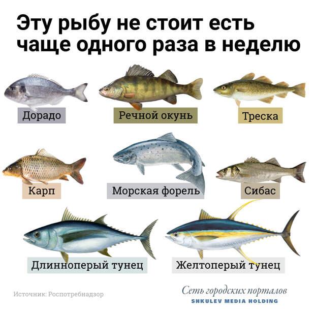 Рыба помогает усваивать в организме витамин D, но на некоторую налегать всё же не стоит — кроме пользы получите побочку