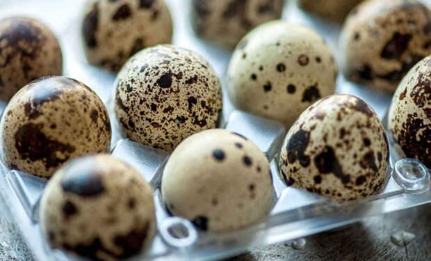 Яйца с фермы: сравниваем пользу перепелиных с куриными