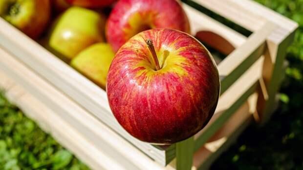Названы малоизвестные полезные свойства яблок