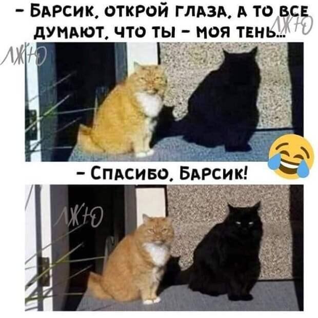 Возможно, это изображение (кот и текст «-барсик, открой глаза. A το все думают. что ты моя тень 1ж1O лж -спасибо, барсик!»)
