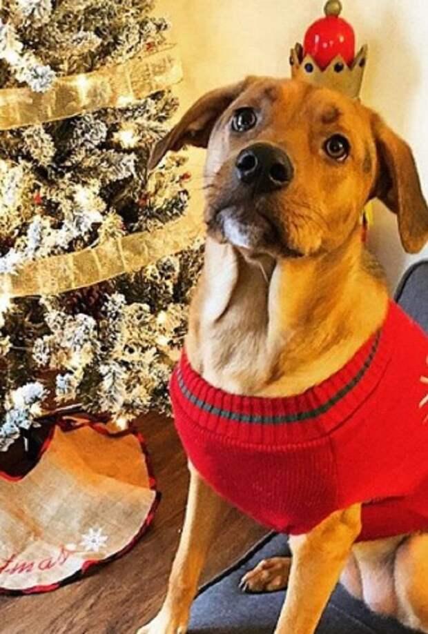 Едва не утонув во время наводнения в Алабаме, собака оказалась в приюте, где ждала хозяев