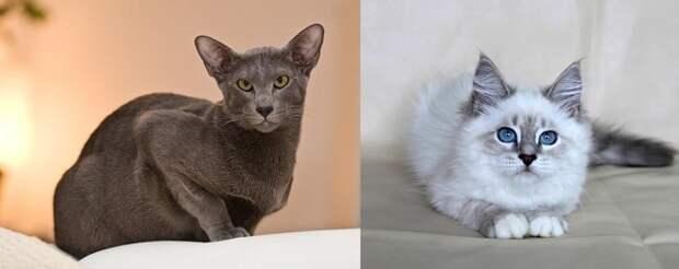 Серые котики