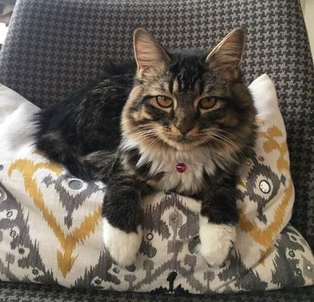 История котенка, родившегося без локтевых суставов
