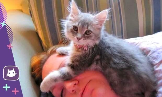 Почему ночью кошка спит с человеком