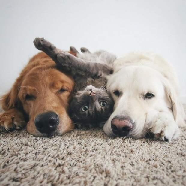 Счастливое семейное собачье-кошачье фото