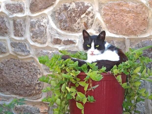 Взгляды кошек на садовый дизайн могут отличаться от хозяйских