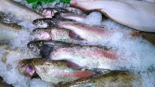 Россия нанесла Китаю ответный рыбный удар