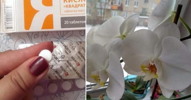 Это средство словно живая вода для моих орхидей. Цветут как ненормальны