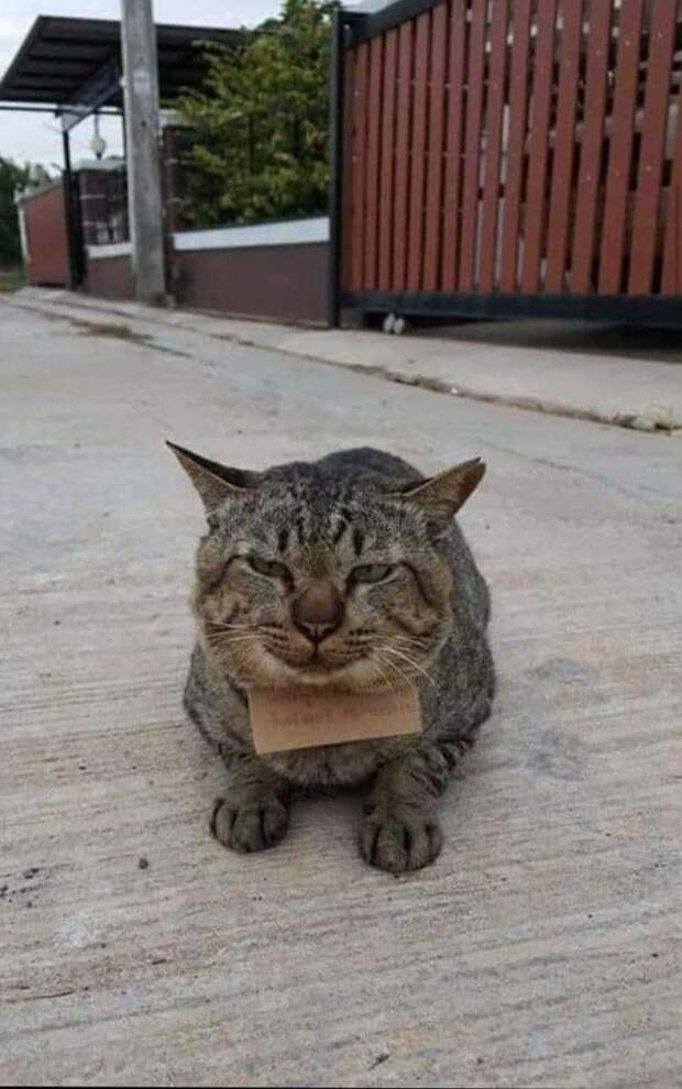 кот с запиской