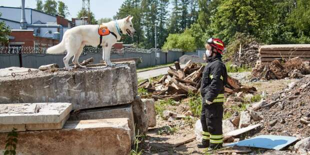 Собаки и их кинологи. Фото: пресс-служба МЧС по ЮВАО