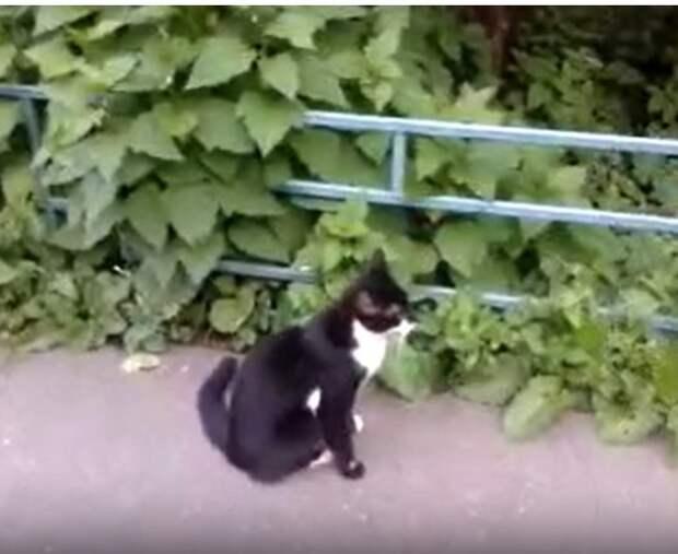 Черно-белая кошка стала изгоем в одном из дворов Молжаниновского