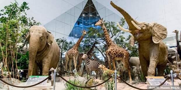 Собянин значительно расширил круг участников проекта «Музеи – детям».Фото: Ю. Иванко mos.ru