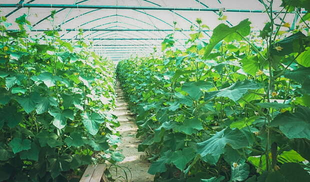 В Оренбуржье на поддержку аграрного производства направлено 3,3 млрд рублей