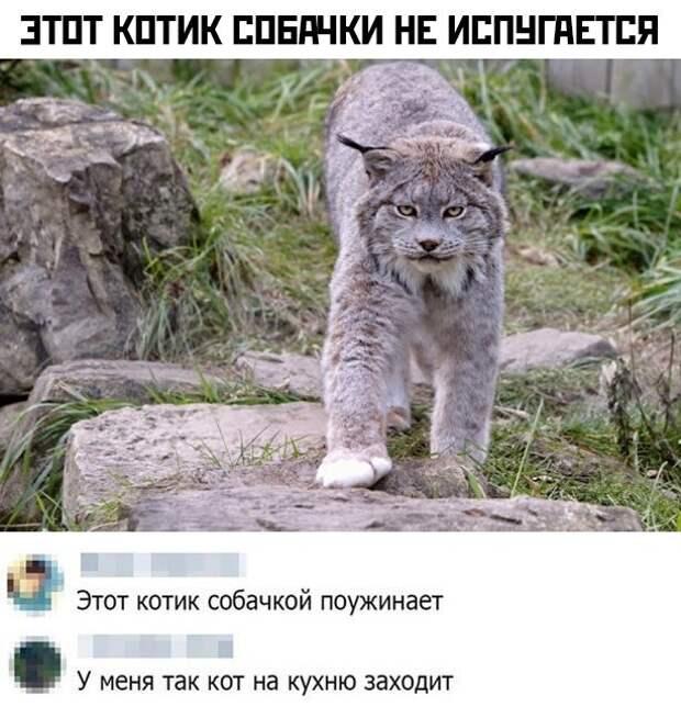 Грозный котик