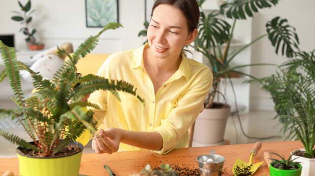 Чем подкормить комнатные растения: шесть простых рецептов удобрений