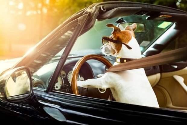 Привезли животное с дачи в квартиру: как минимизировать стресс питомца
