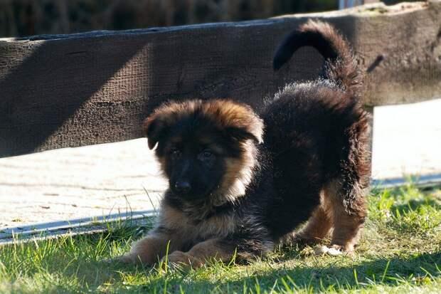 Наказание за жестокое обращение с животными могут внести в КоАП РФ