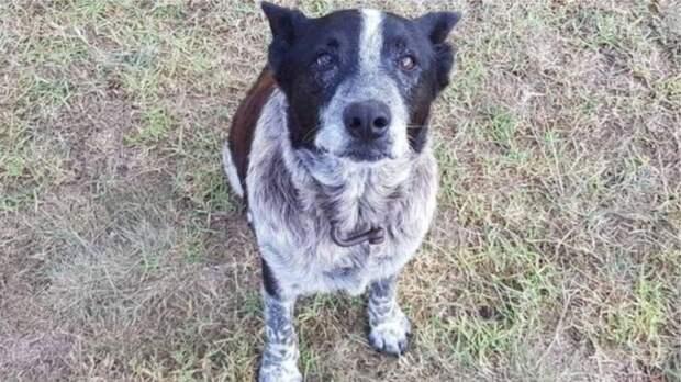 3-х летнюю девочку в Австралии всю ночь от холода спасал пес