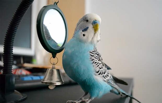 Попугай помог племяннице с экзаменами