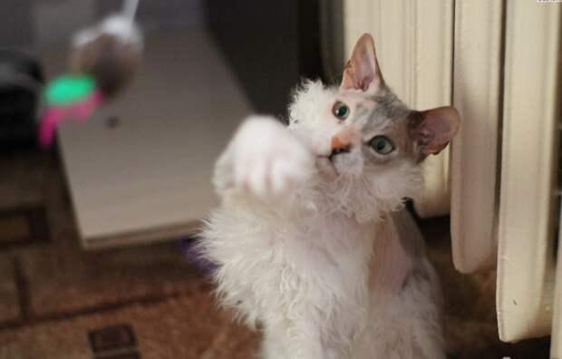 «Мы не знали о том, что нас ждёт!!!» Они случайно принесли домой дочь сфинкса и домашней кошки