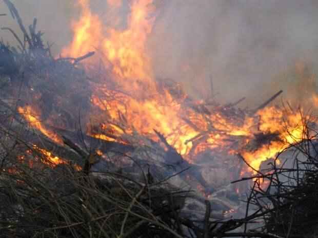 В Госдуме России призвали отменить приказ об «экономически нецелесообразном» тушении лесных пожаров