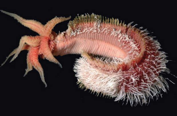 Пять экстремальных организмов, способных выжить на других планетах