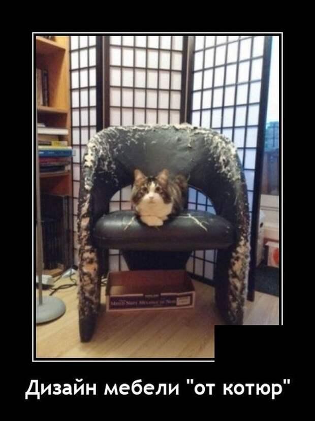 Демотиватор про мебель и кота