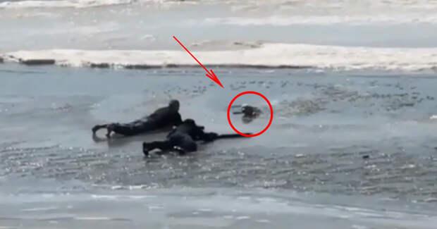 Пёс бежал за птичкой и угодил под лёд… Трое парней рискнули жизнью, чтобы его спасти!