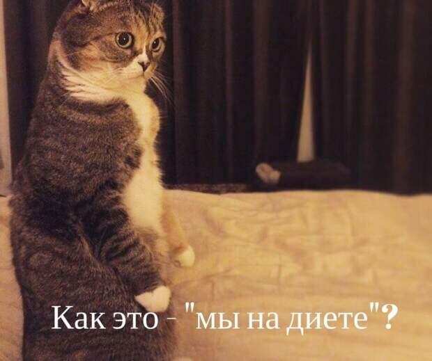 День кошек в России.