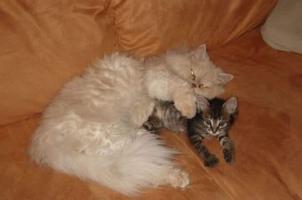 кошка и котенок на диване