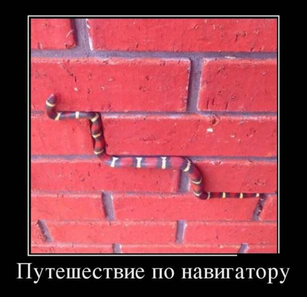1485983444_19