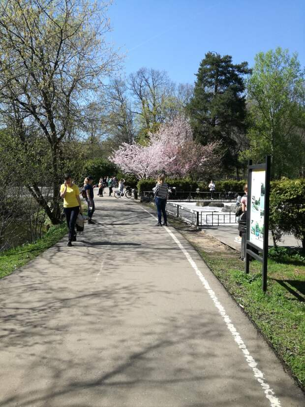Прогулка по Ботаническому саду Москвы