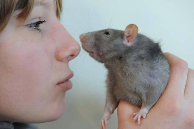 Нос человека чувствительнее, чем у большинства животных. Почему мы об этом не догадываемся?
