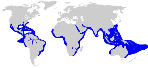 Ареал бычьей акулы. Фото: Chris_huh - Compagno, Leonard; Dando, Marc & Fowler, Sarah (2005). Sharks of the World. Collins Field Guides. ISBN0-00-713610-2., CC BY-SA 3.0