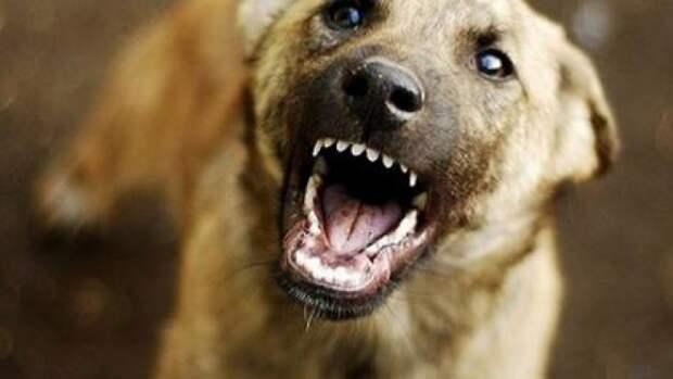Бродячие собаки: как не дать себя укусить