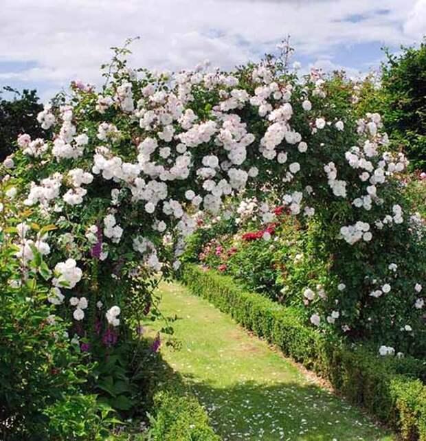 секреты красивого розария
