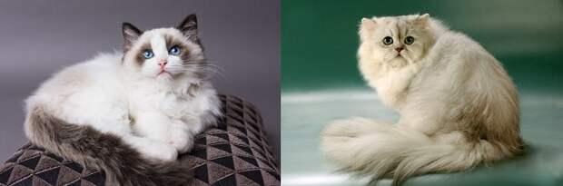 Коты позируют