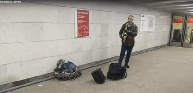 Собака в столичном метро подвыла под хит Джеймса Брауна и заработала кучу денег Джеймс Браун I Got You, видео, животные, игра в переходе, метро, музыка, саксофон, собака