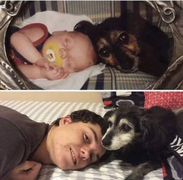 Милые фотографии любимых собак