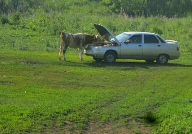 1. Сельские автосервисы немного отличаются от московских деревня, коровы, люди, прикол, провинция, село, трешак, юмор