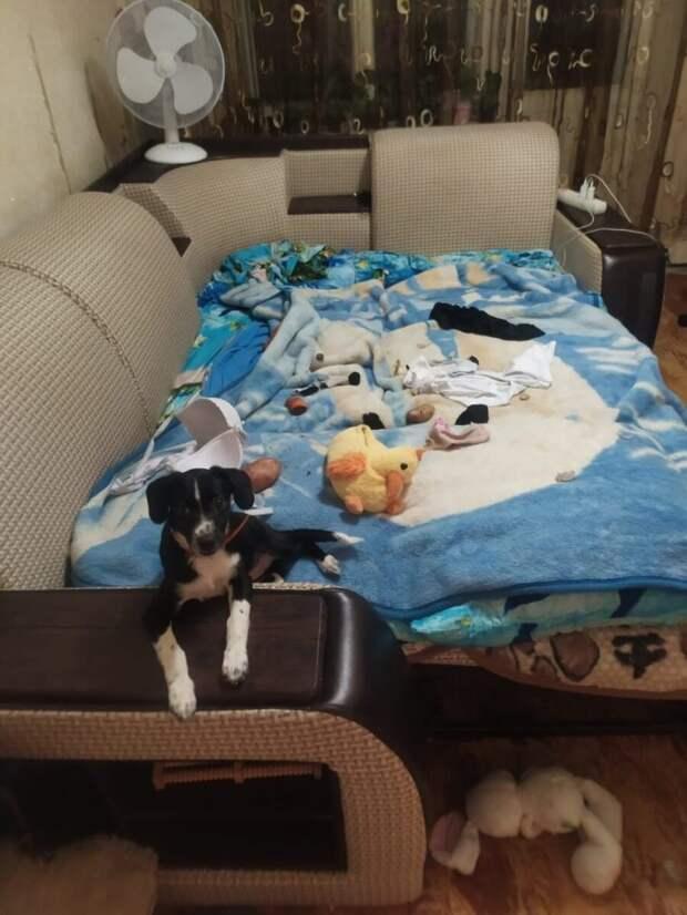 Собаку выгнали из дому за испорченный тапок