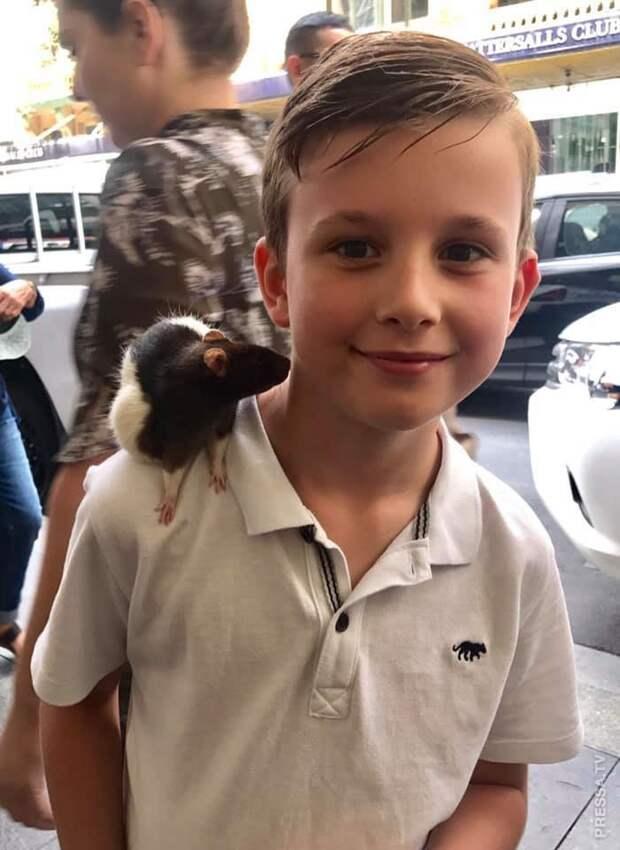 У бездомного украли любимую крысу и полиция ищет вора