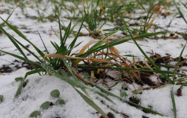 10 способов, как избавиться от сорняков на участке практически навсегда