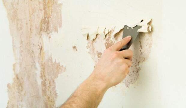 4 совета, как быстро и качественно удалить старую побелку с любой поверхности