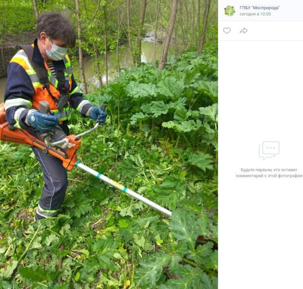 Волонтеры из Куркина выйдут на борьбу с борщевиком