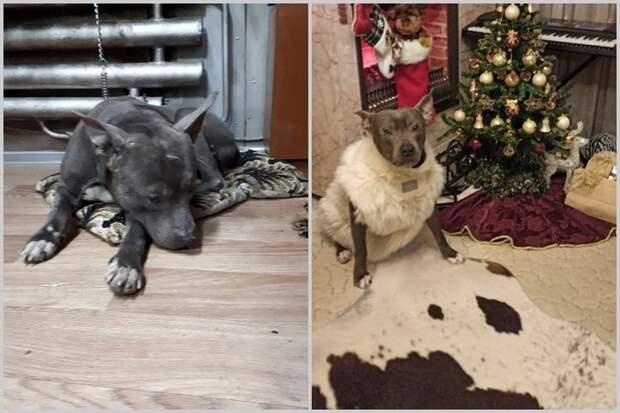 «Рыдал, боясь, что его снова бросят»: история преданного пса, которого сдали в приют после рождения ребенка
