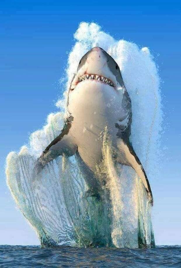 А вот и морские обитатели подоспели. Прыгнет такое рядом, умрешь сразу от ужаса... животные, красота, полет, природа, прыжок, удживительное