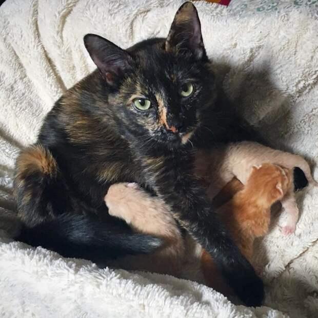 Кошка «обгорелой» расцветки искала выход… Куда же пристроить свой огромный живой живот?