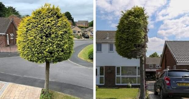 «Мелочный» сосед отпил половину дерева, которое заходило на его участок