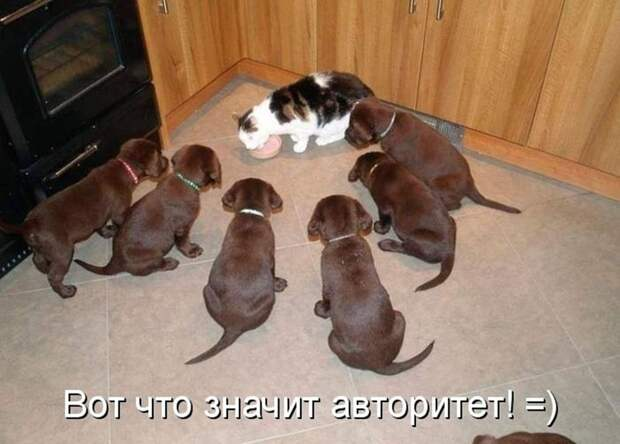 Кошки и собаки. Подборка смешных фотографий кошки, кошки и собаки, смешные фотки, собаки, фото приколы